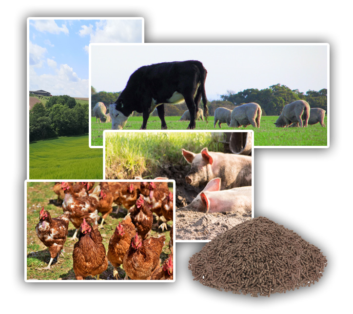 Agricultural Livestock Animal Feed